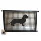 Dachshund Wire Haired Puppy Guard