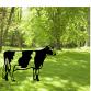 Frisian Cow Garden Art